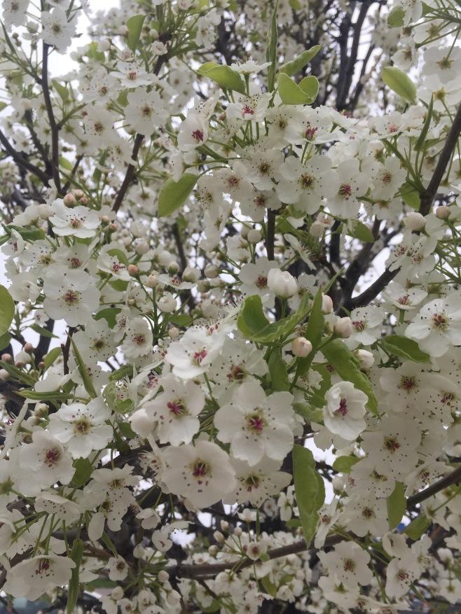 Random flower tree in Hamilton Ontario
